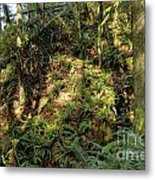 Forest Floor Metal Print