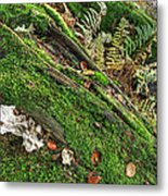 Forest Floor Fungi And Moss Metal Print