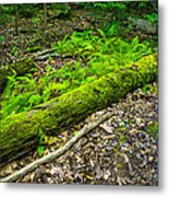 Forest Floor Gosnell Big Woods Metal Print