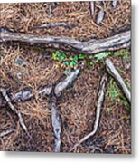 Forest Floor With Tree Roots Metal Print