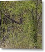 Forest Glimpse Metal Print