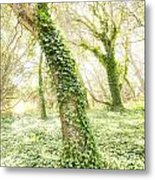 Forest Glow - The Magical Trees Of The Los Osos Oak Reserve Metal Print