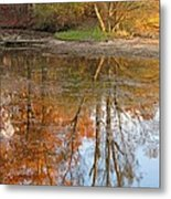 Forest Glow Metal Print