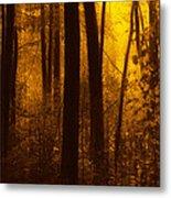 Forest Glow Metal Print