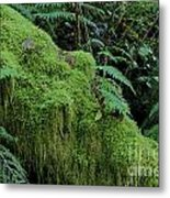 Forest Greenery Metal Print