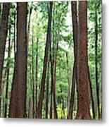 Forest In Early Morning, Wetlands Metal Print