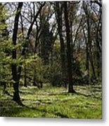 Forest In Spring Metal Print