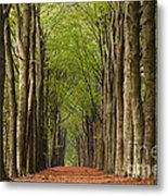 Forest In The Fall Metal Print