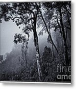 Forest In The Fog Metal Print