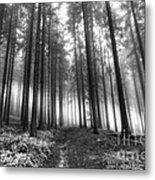 Forest In The Mist Metal Print