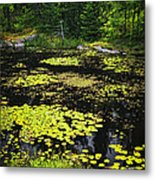 Forest Lake With Lily Pads Metal Print