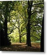 Forest Light And Shadows Metal Print