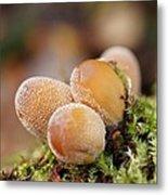 Forest Mushrooms Metal Print