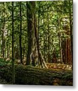 Forest Of Cathedral Grove Collection 1 Metal Print