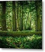 Forest Of Cathedral Grove Collection 7 Metal Print