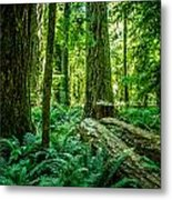 Forest Of Cathedral Grove Collection 8 Metal Print