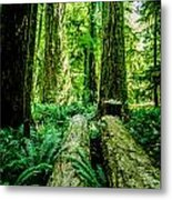 Forest Of Cathedral Grove Collection 9 Metal Print