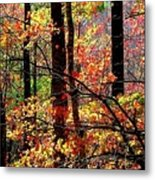 Color The Forest Metal Print