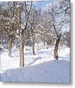 Forest Ofconstantine Metal Print