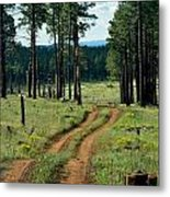 Forest Path Metal Print by Carrie Putz