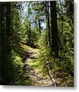 Forest Path In Spokane 2014 Metal Print