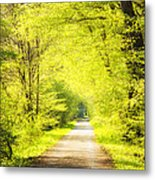 Forest Path In Spring With Bright Green Trees Metal Print