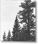 Forest Ridge Metal Print