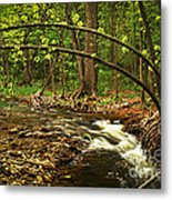 Forest River Metal Print