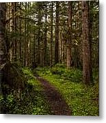 Forest Serenity Path Metal Print