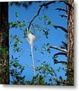 Forest Silkworm Nest  Metal Print