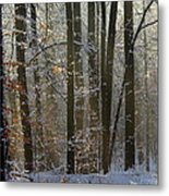 Forest Snowscape Metal Print