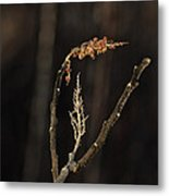 Forest Song Metal Print