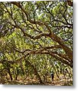 Forest Stroll - The Magical And Mysterious Trees Of The Los Osos Oak Reserve. Metal Print