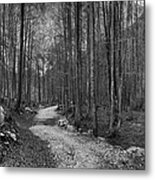 Forest Trail Bw Metal Print