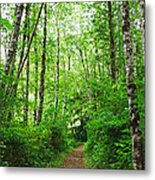 Forest Trail To Follow Metal Print