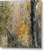 Forest Trees In Winter  Metal Print