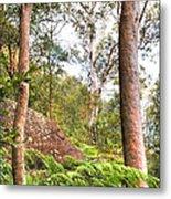 Forest Walk 16 Metal Print