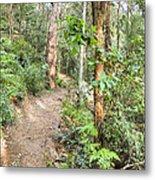 Forest Walk 17 Metal Print