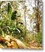 Forest Walk 6 Metal Print