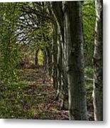 Forest Walk Hdr Metal Print