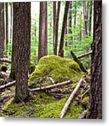 Forest With Moss-covered Rocks Along John's Lake Trail In Glacier Np-mt Metal Print