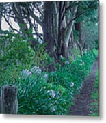 Forested Path Metal Print