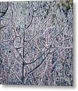 Forests Of Frost Metal Print