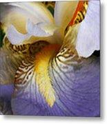 Forever Iris  Metal Print
