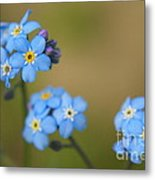 Forget Me Not 01 - S01r Metal Print