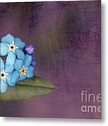 Forget Me Not 02 - S0304bt02b Metal Print