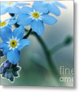 Forget Me Not Metal Print by Simona Ghidini