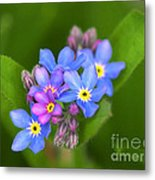 Forget-me-not Stylized Metal Print