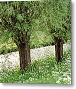 Forgotten Dreams. The Spring Has Arrived. Netherlands Metal Print
