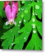 Formosa Bleeding Heart On Ferns Metal Print